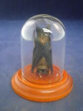 Sale!*TAXIDERMY BAT IN A GLASS DISPLAY DOME-rat, mouse-skunk-bird-opposum-turtle