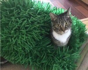 2x Tissue paper grass mat cat  - HEAVYWEIGHT  15x24 inches