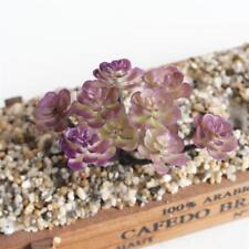 2 Pcs Plante Succulente Artificielle Fleur Cactus Décor Maison Rouge Violet