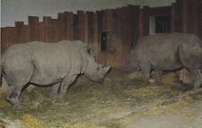 CALGARY , Alberta , Canada , 50-60s ; White Rhinocerous , Zoo