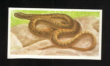 Smooth Snake--1990 Brooke Bond Tea Card--Issued in England