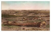 Petrified Forest, Adamana, AZ Hand-Colored Postcard *5N(2)20