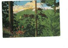New listing Vintage Postcard Bailey Range in Olympic National Park Washington Unused