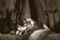 DOG ART PRINT Barn Buddies by Barry Hart Cowboy Boots Puppy Western Poster 11x14