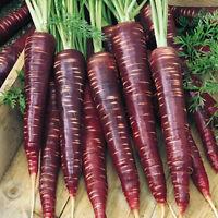 500 stk KAROTTE COSMIC PURPLE Samen Daucus Carota Lila Möhre Gemüse Frucht K3A5