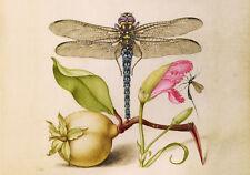 Circa 1592 Botanical Watercolor Painting Pear Flower Fine Canvas Print