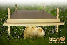40x50cm Chioccia artificiale / hen elettrico - basso 46w energia