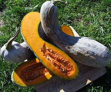 Pumpkin Gramma Trombone (20seeds) - Organic Heirloom from Life-Force Seeds