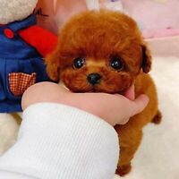 Teddy Dog Lucky Reversible Plush Realistic Figure Toy Dog Plush Stuffed Animal