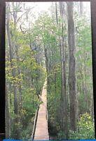 Boardwalk Okefenokee Swamp Park Waycross Georgia Vintage Postcard