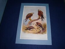 Birds Of Prey Mounted Prints