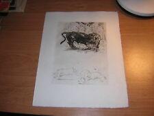 1948.eau forte Odette Denis Lion & buffle.animaux
