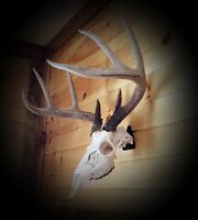 European Skull Mount Hanger *The EuroHanger*  Deer Skull Hook