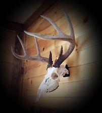 European Skull Mount Hanger *The EuroHanger* Deer, Antelope, Bear Skull Hook