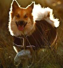 Ropa y calzado Chubasquero para perros
