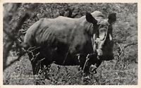 Vintage Postcard, Square Lipped Rhino, Hluhluwe Game Reserve, South Africa 6Y