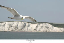 Signed numbered limited edition print seagull 'Over Dover' David W Meger straits