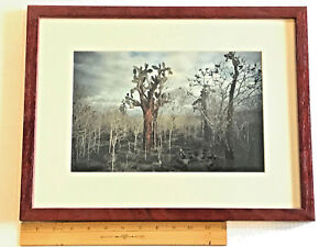 """1997 A. Mishkin Galapagos photo """"Mystery Forest"""" 13 x 17 framed"""