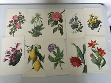 """VINTAGE LOT 11 FLOWER LITHOGRAPHS PRINTS PRINTED IN GERMANY 6"""" x 10"""""""