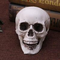 Skull Human Head Bone Resin Model Skeleton Halloween Statue Creative
