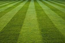 2kg FRONT LAWN RYEGRASS FREE LUXURY GRASS SEED HM2