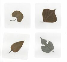 4 Laminated Leaf Collection Set in 75x75 mm plastic sheet Education Specimen