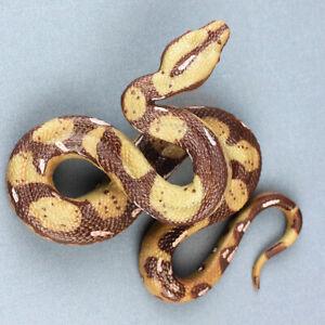 US Realistic Fake Plastic Snake Lifelike Scary Modle Toys Party Prank Joke Props