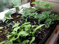 How to Garden 100+Books CDR Grow Organic Vegetables Doomsday Survival Prep Farm