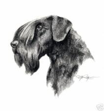 Cesky Terrier Ii Pencil Dog 8 x 10 Art Print by Artist Djr