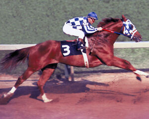 Secretariat (Ron Turcotte - Up) 1973 Preakness Stakes - 8x10 Color Photo