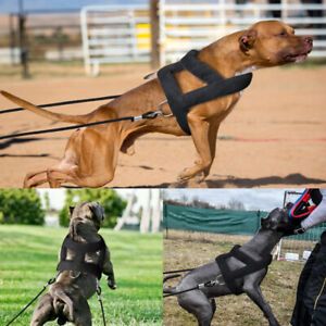 Weight Pulling Sledding Dog Harness and Leash Set Strong for Pit Bull Mastiff