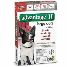 Advantage II for Large Dogs 21 - 55 lbs BAYER 6 Month Supply USA FREE SHIPPING