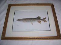"ANTIQUE SHERMAN DENTON ""THE PIKE"" ORIGINAL 1902 FISH PRINT"