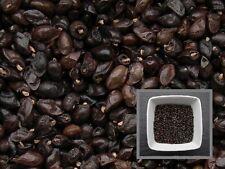 Grande Consoude - 30 graines -  Symphytum Officinale - Comfrey - ( Engrais vert