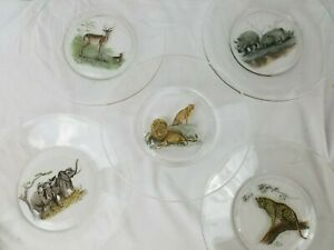"""5 Glass 8"""" Plates With African Wild Animal Paintings, ?Pier I"""
