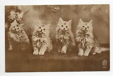 Animal CHAT cat cats carte N° 6 4 chatons