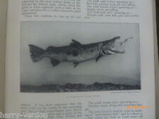 Salmon Fishing Fly Tying Hooks Old Antique Photo Illustrated Article 1912