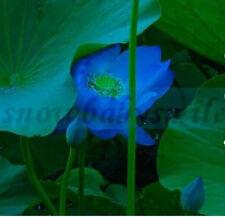 10 Mini Blue Bonsai Lotus Seeds Bowl Nelumbo Nucifera Pond Aquarium Flower Water