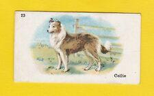 DOGS  -  B.A.T.  CO.  LTD.  -  SCARCE  DOG  CARD  -  COLLIE  -  1913