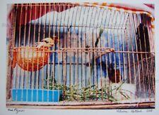 """Sus Pajaros"" Original Photography SIGNED 2018 Pet Birds in Cage Mexico City"