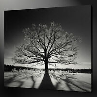 BLACK WHITE TREE SUNSET LANDSCAPE WALL ART PICTURE CANVAS PRINT READY TO HANG