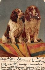 """Cocker Spaniel? Curly Hair Dogs, Chiens, Hunde, Raphael Tuck """"Write Away"""" 1903"""