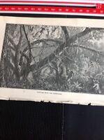 H2-2 Ephemera 1872 Book Plate Amazon - Hunting With The Sarbacan