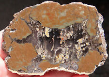 Mw: PRIDAY PLUME AGATE -Oregon- Polished Slab