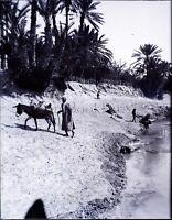 MAGHREB Maroc Algérie Tunisie Âne Fleuve c1900,NEGATIF Photo Plaque Verre VR9L2