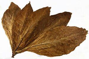 Kentucky Soleil Cured Tabac Rohtabak Feuilles Naturtabak Tabakblätter Tobacco