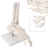 Life Size Foot Joint Anatomical Skeleton Model Human Medical Anatomy Education