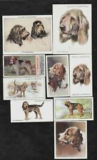 9 Different Vintage Otterhound Tobacco/Cig/Tea Dog Cards Lot