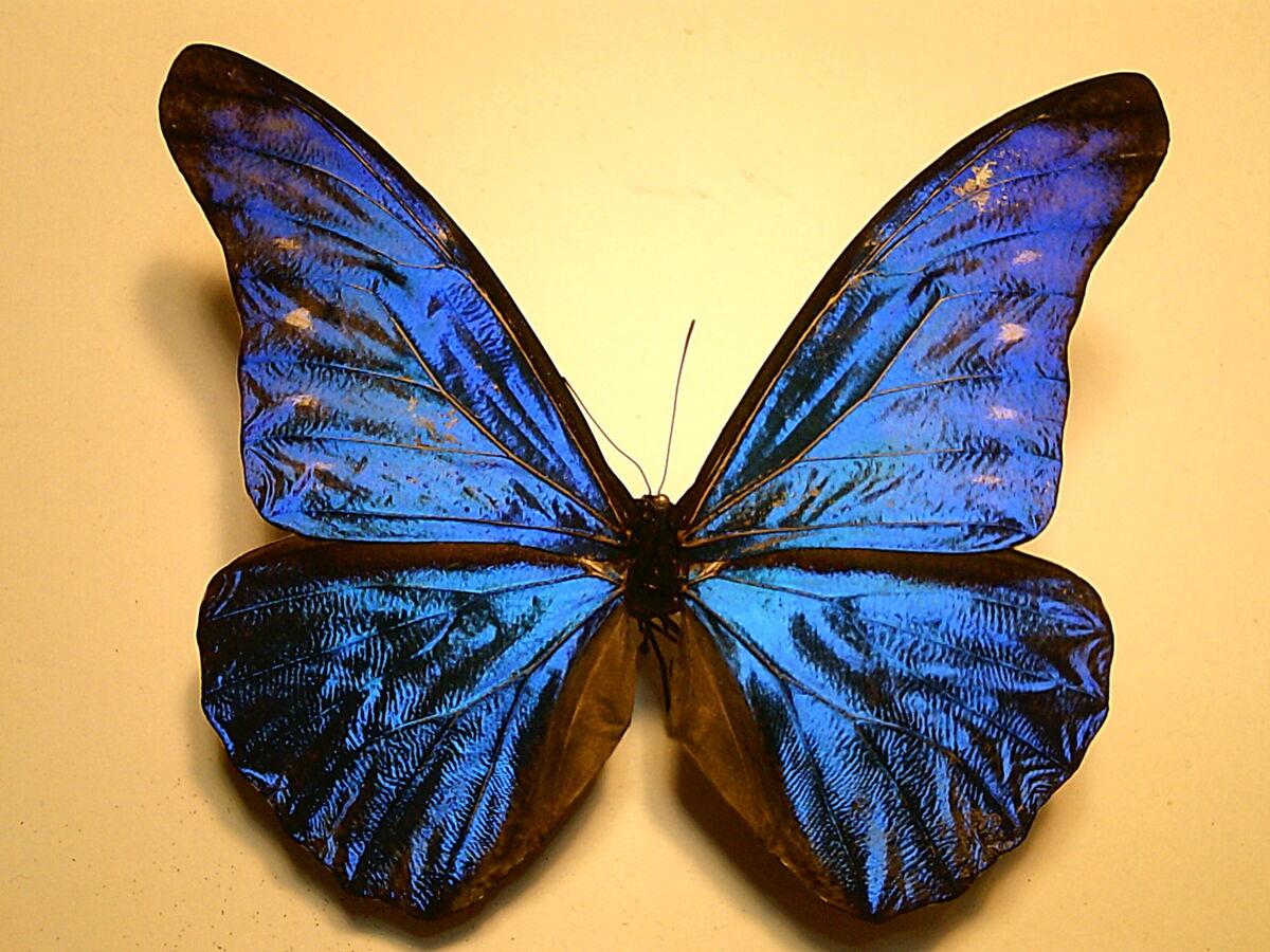 Unique Butterflies