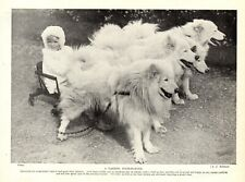 1930s Antique Samoyed Dog Print Sled Dogs Pull Child In Cart 4324d